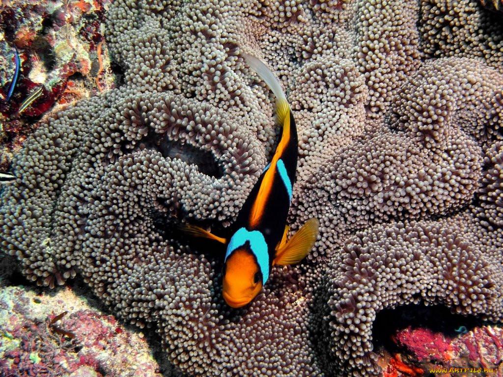 обитатели тихого океана только картинки пока лопатой грузил